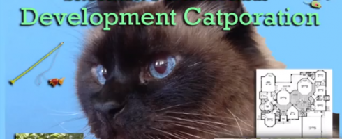 Cat video web series